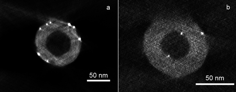 Electron tomographic analysis of Au(PVA) on N-CNF